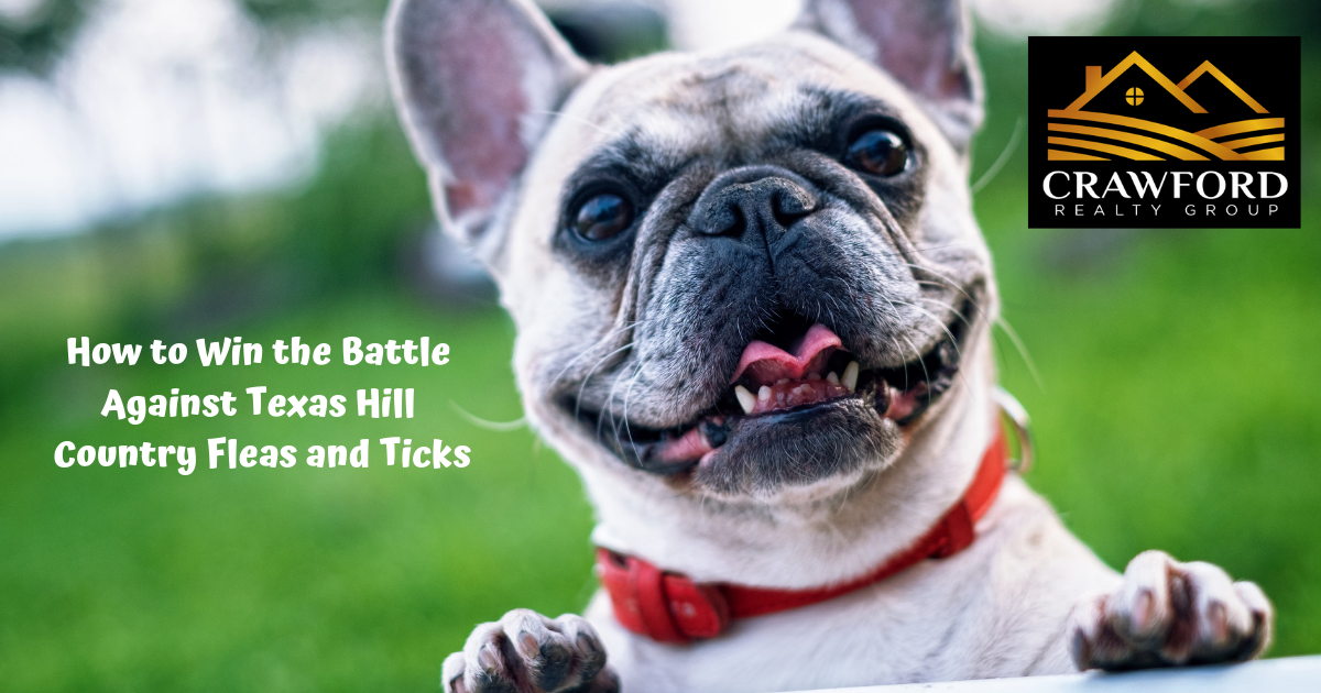 Eliminate Fleas and Ticks
